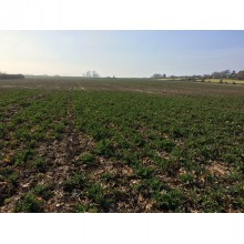 *SOLD SUBJECT TO CONTRACT*  Level Fertile arable land almost 25 acres between Hatfield and Littleworth Worcester - Image 1